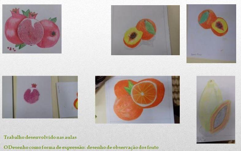 Desenho da observação do fruto